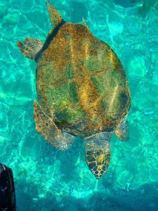 Dalyan Schildkrötenstrand Tour Von Marmaris