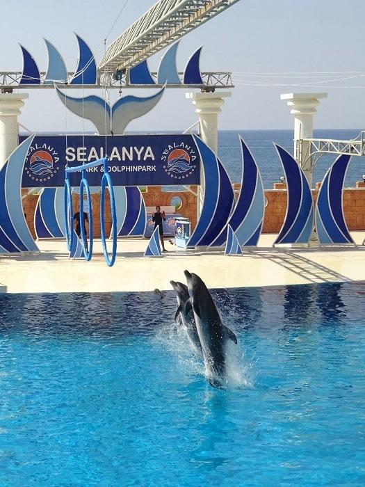 Delphinarium in Alanya