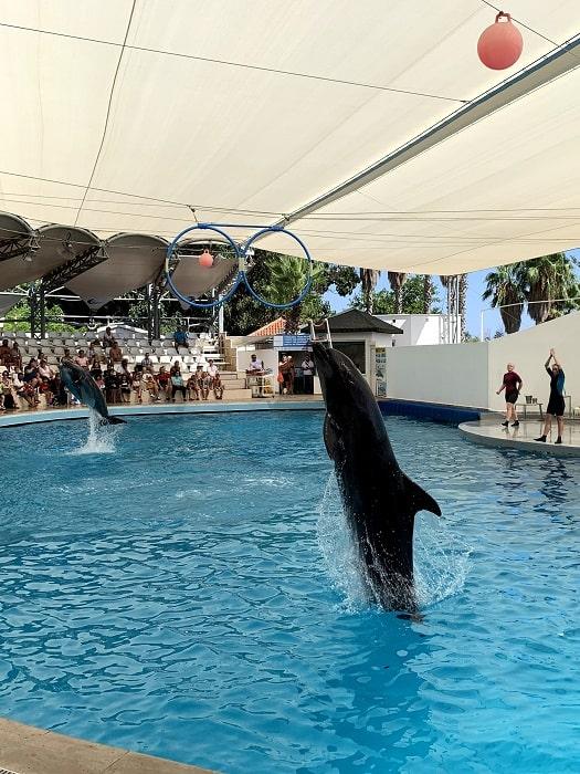 Delphinarium in Antalya
