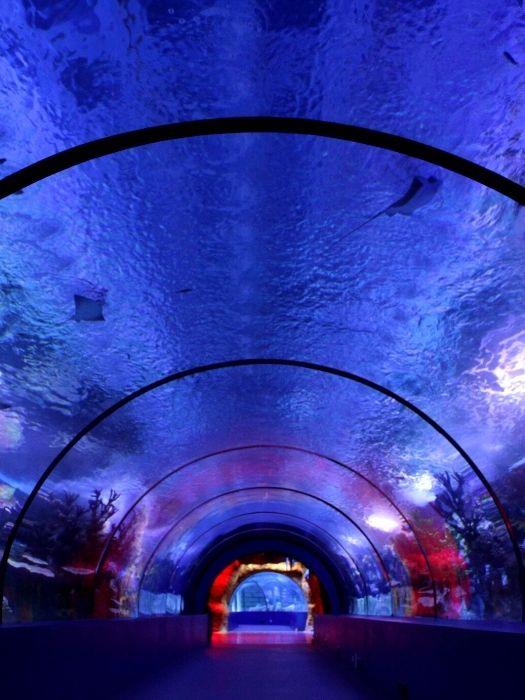 Antalya Aquarium Tour von Alanya