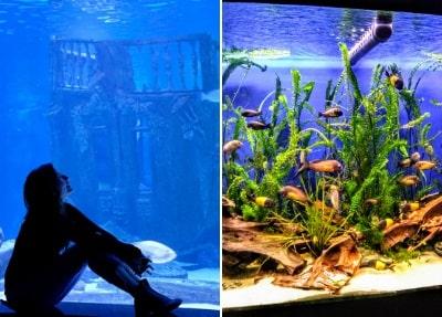 Antalya Aquarium Tour von Belek