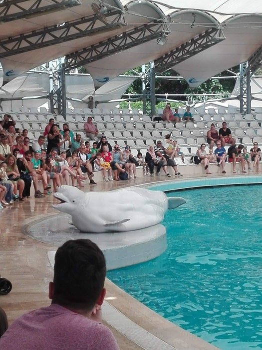 Dolphinarium - Delfinpark in Side