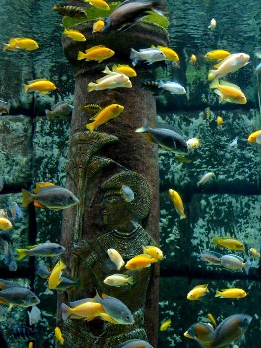 Side nach Antalya Aquarium